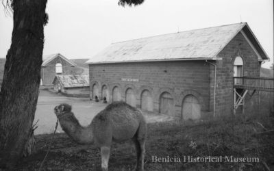 Brendan Riley's Solano Chronicles: Unusual History of Benicia's Camel Barns